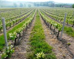 au coeur des vignes du médoc.