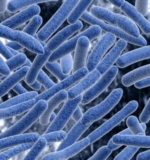 sti biotechnologie travaille sur la nutrition animale, la nutrition aquacole et