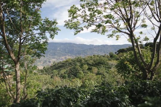 Planter des arbres: un atout pour une agriculture durable