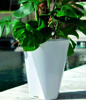 meg, l'objet connecté des amoureux des plantes.