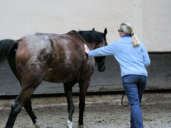 le stagiaire doit remettre le cheval à sa place