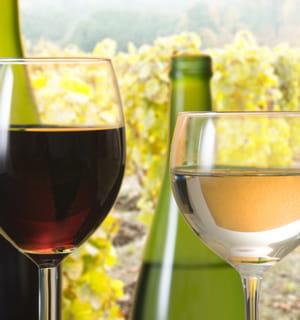le vin bio fait une percée fulgurante en france.