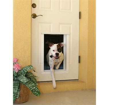 une porte automatique pour son chien : sûre et pratique