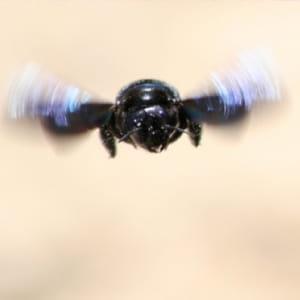 des insectes espions