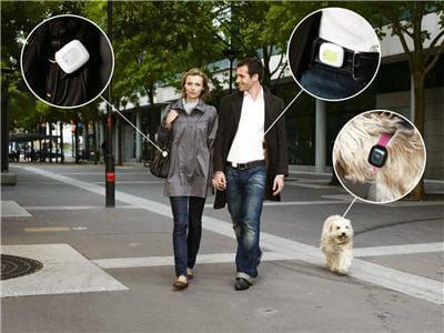 vérifier que son chien marche suffisamment pour rester en bonne santé.