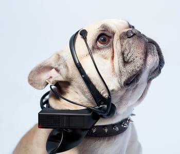 le casque no more woof reconnaît les émotions des chiens.