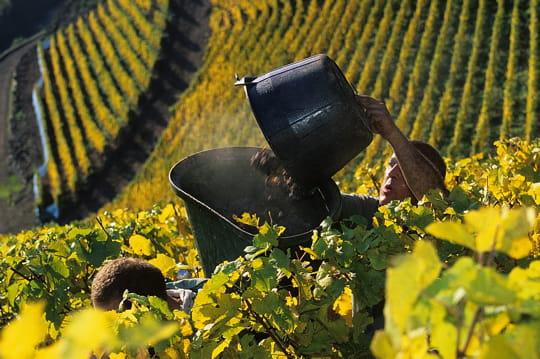 Prix de la vigne