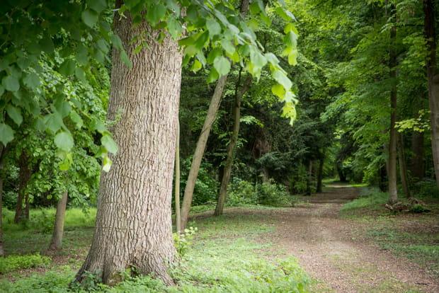 Parc de 20 hectares