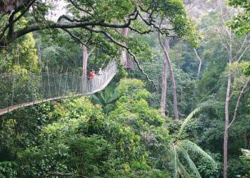 la jungle malaisienne recèle de nombreuses espèces végétales uniques au monde.
