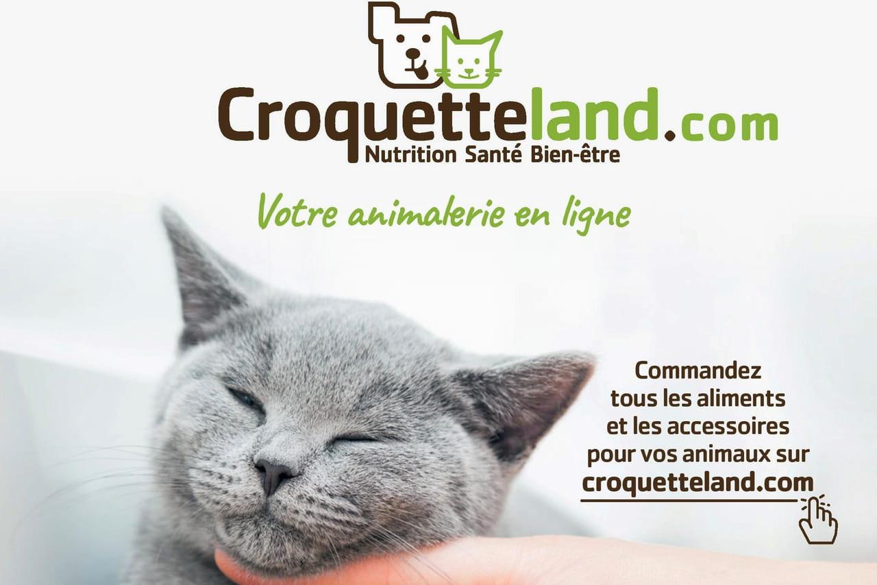 Croquetteland Le Bilan Un An Après Son Rachat Par Carrefour