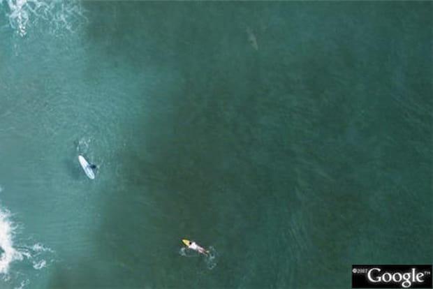 Où est le requin ?
