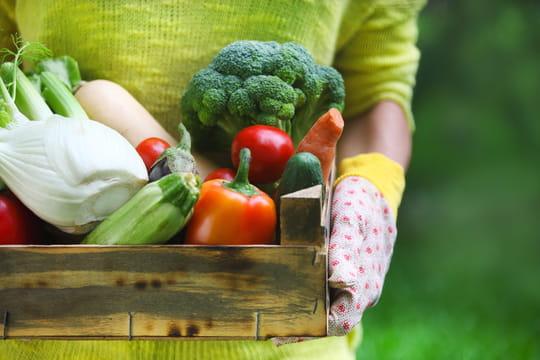 Courses alimentaires : qui sont les clients des circuits courts ?