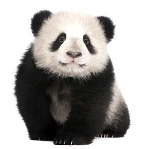 l'algorithme google panda été déployé en france au milieu du mois d'août.