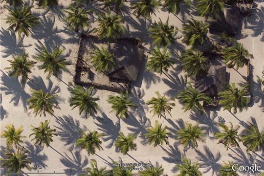 Les cocotiers au vent