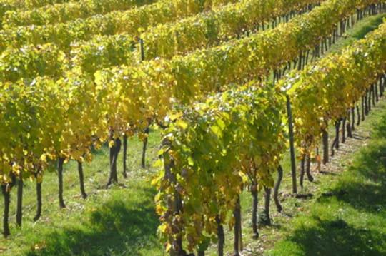 Les vignes les plus chères de France