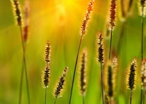 les plantes qui repoussent naturellement chaque année nécessitent beaucoup moins