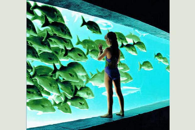 Un aquarium géant avec des requins