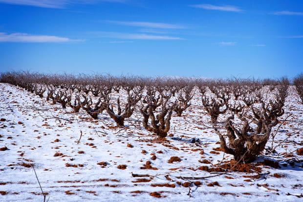Le domaine viticole d'Andrés Iniesta Fuentealbilla (Espagne)