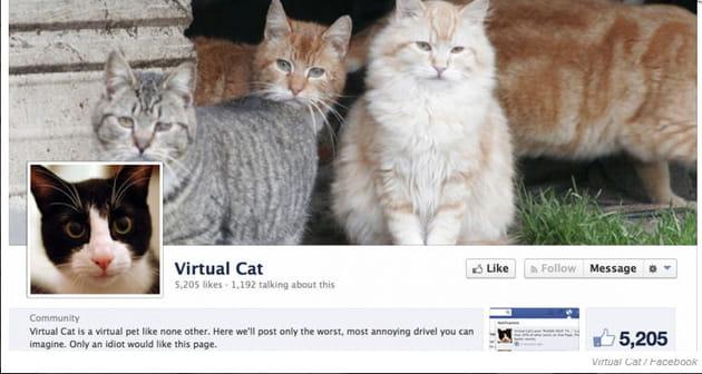 virtual cat