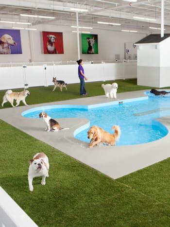 paradise 4 paws un h tel pour chiens et chats. Black Bedroom Furniture Sets. Home Design Ideas
