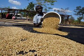 La culture du café, une planche de salut pour le Soudan du Sud
