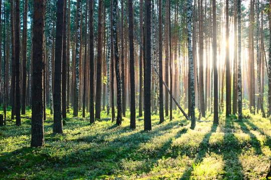 Investissement forestier 2020: rendement et défiscalisation