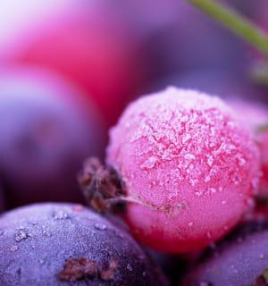 les colorants alimentaires naturels sont fabriqués à partir de concentrés de