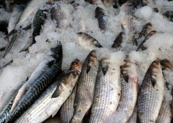 le pnue prévoit l'épuisement des réserves halieutiques d'ici 2050.