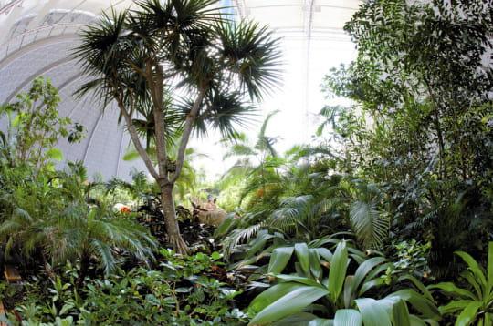 Une forêt tropicale aux 600espèces