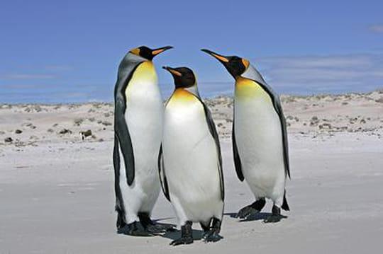 John Paul, l'entreprise qui invite 30 pingouins à votre anniversaire