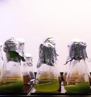 fermentalg produit des molécules chimiques à partir de microalgues.
