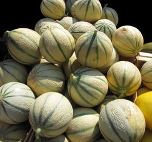Le melon charentais n 39 a de charentais que le nom - Culture du melon charentais ...