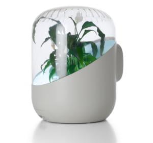 andrea optimise le pouvoir naturel de purification de l'air.