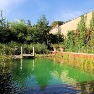 les piscines naturelles, qui recyclent l'eau sans produits chimiques, devraient