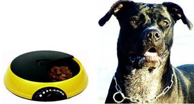 un bol high-tech pour réguler les repas de son animal