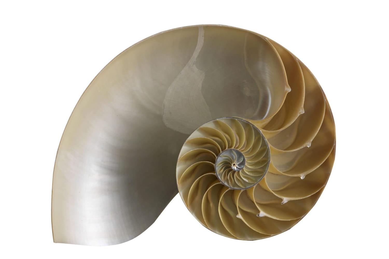 Shell en informatique: définition simple, rôle et exemples