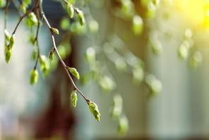 Les livres de management à lire pour célébrer le printemps