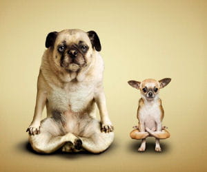 yoga cats & dogs