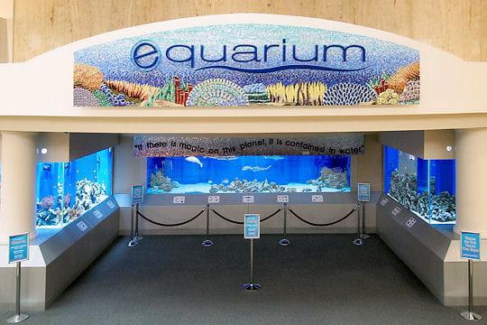 Equarium