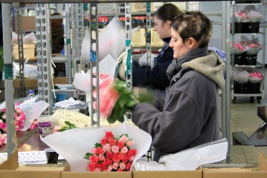 Atelier roses