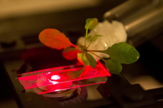 Les plantes bioniques ou comment transformer un arbre en antenne-relais