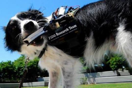 L'inventeur des Google Glass veut faire parler les chiens