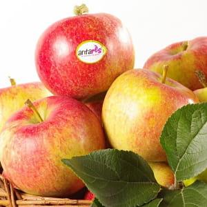 la pomme antarès tente de s'imposer sur le marché parmi les autres marques.
