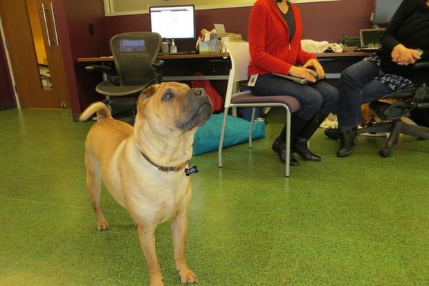 Un atelier de garderie pour chiens