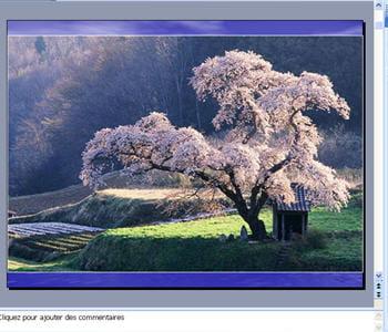créer un diaporama de photos est presque instantané sous powerpoint