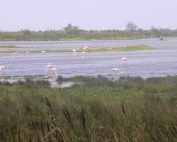 le domaine de listel s'étend sur des milliers d'hectares.