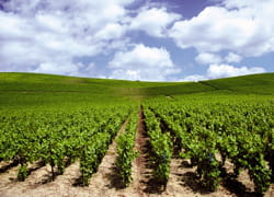 les vignerons veulent se débarasser à tout prix de leurs stocks.