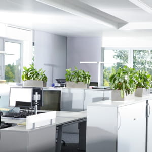 les plantes vertes animent une pièce et la rendent plus chaleureuse.