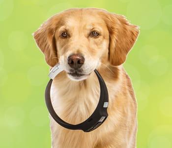 le collier pour chien voyce veille à la santé de son animal préféré.