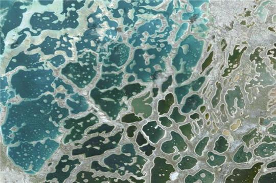 Corail de kiribati